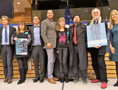 European Parliament: Cristina Lapis presented the solutions for the stray dogs (video)