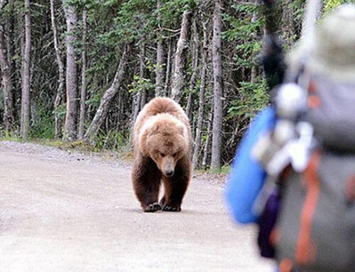 Ce trebuie să știm despre urși? (2)