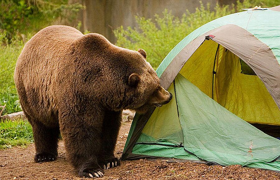 ursul de grăsime ajută dacă ceea ce este mai bine pentru tratamentul venei varicose