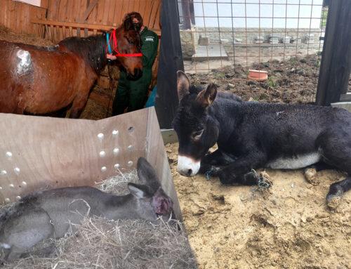 Pașii de urmat când asiști la acte de cruzime împotriva animalelor