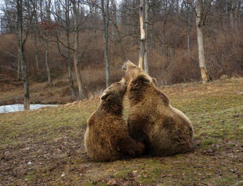 WTG, un prieten fidel pentru urșii din AMP Libearty
