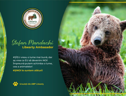 The first romanian ambasador for the bears!