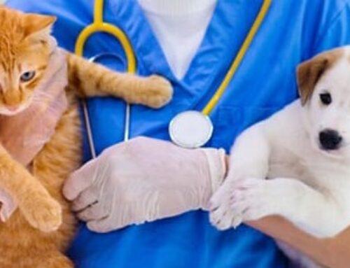 Campanie gratuită de sterilizare a câinilor și pisicilor!