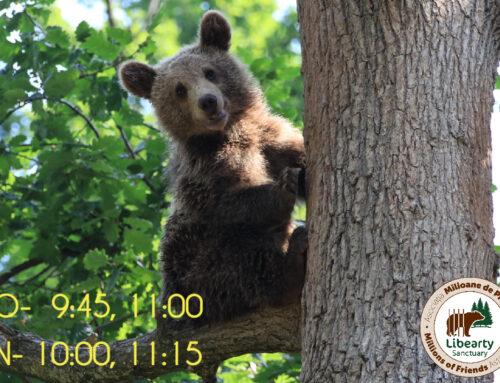 Visit the largest brown bear sanctuary in the world!